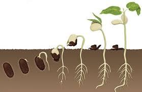 love seeds benih cinta